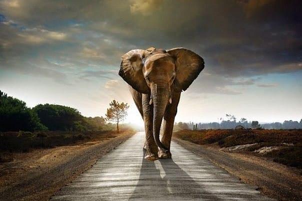 Слоны соблюдают ритуал захоронения