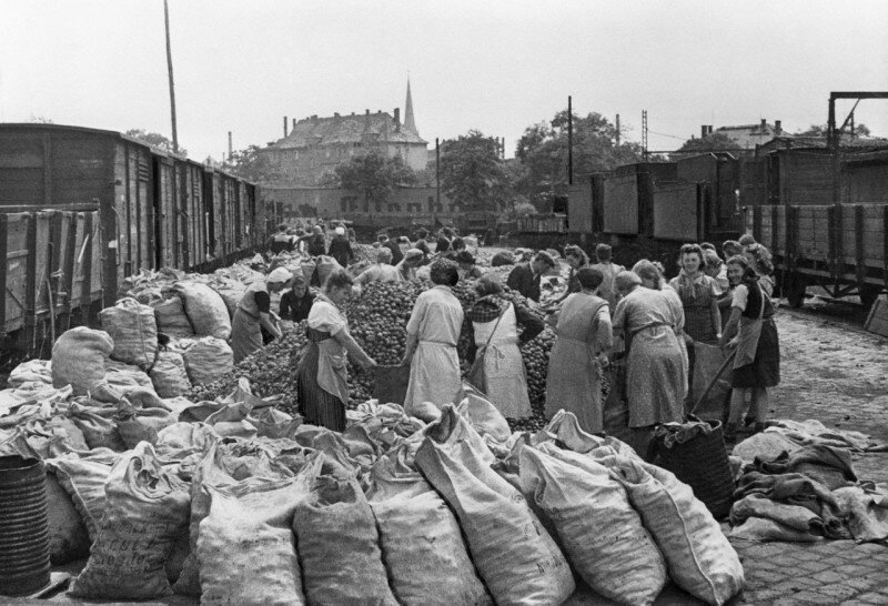 Жители Берлина получают картошку от советской военной администрации в Германии, 19 мая 1945 года. история, ретро, фото