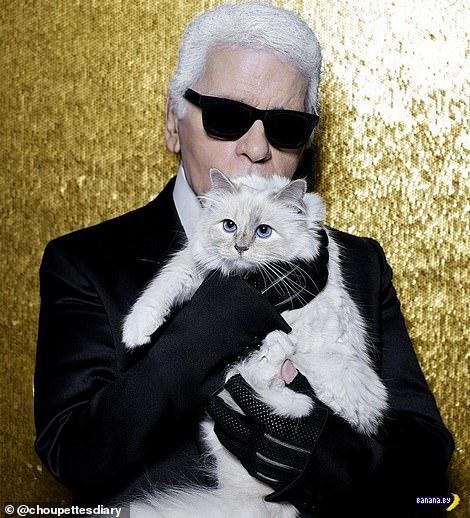Кошка Choupette и её богатства