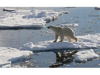 Live Science (США): почему в Арктике так много нефти?