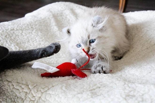 Котенок играет