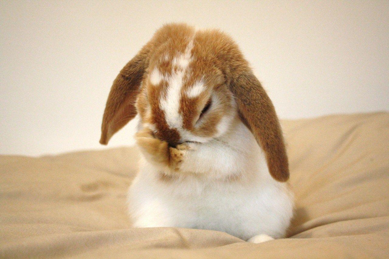 фото и картинки грустных зайчиков большинстве