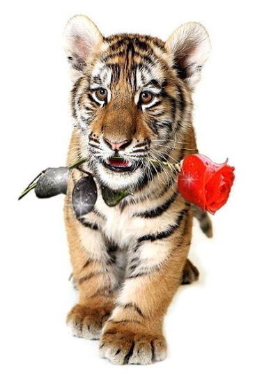 Картинка с днем рождения с тигром, картинки ура