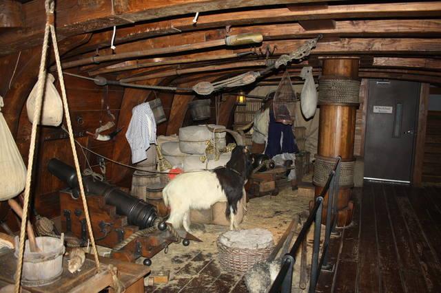 Картинки по запроÑу козы, овцы и телÑта Ñпокойно разгуливали по кораблю