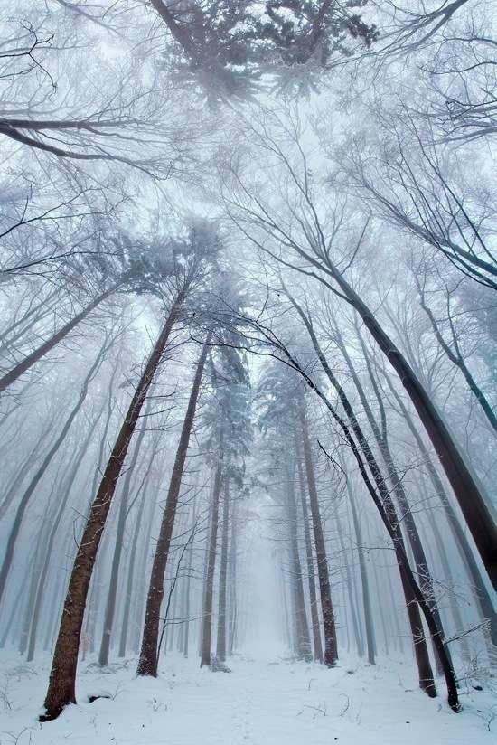 Лесные пейзажи природа,путешествия