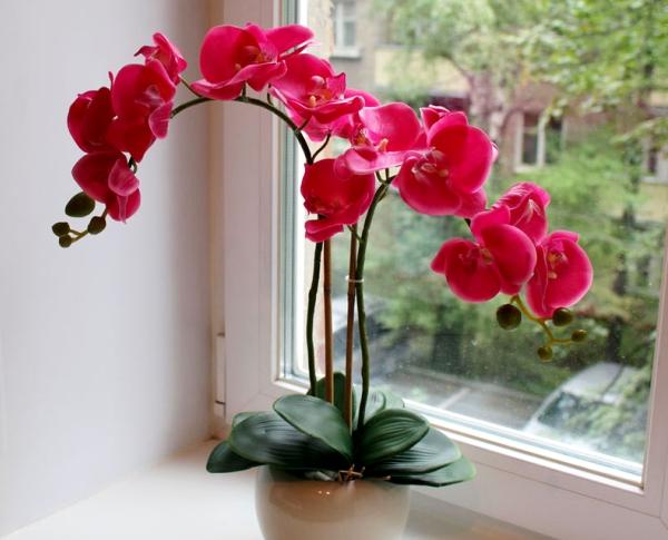 Болеет орхидея, не цветет, есть выход - чесночная вода!