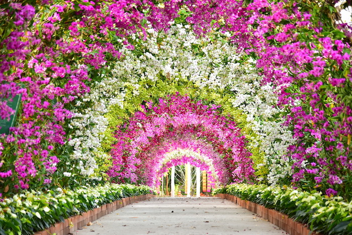 Цветочный восторг.