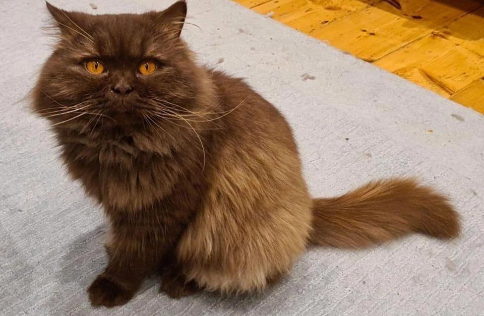 На побережье Британии нашли российского кота-путешественника Великобритания,котики,Россия