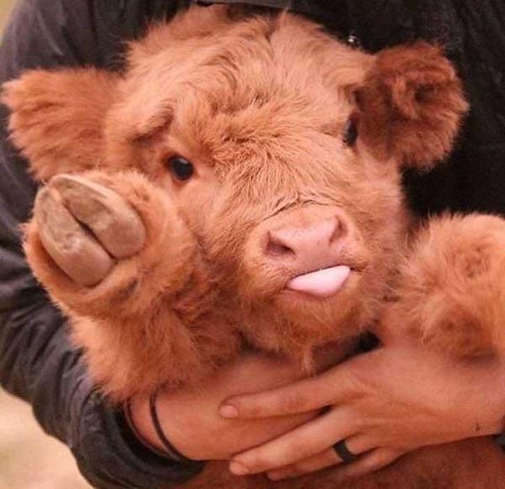 25малышей животных, которые заставят улыбнуться даже суровых сотрудниц паспортного отдела
