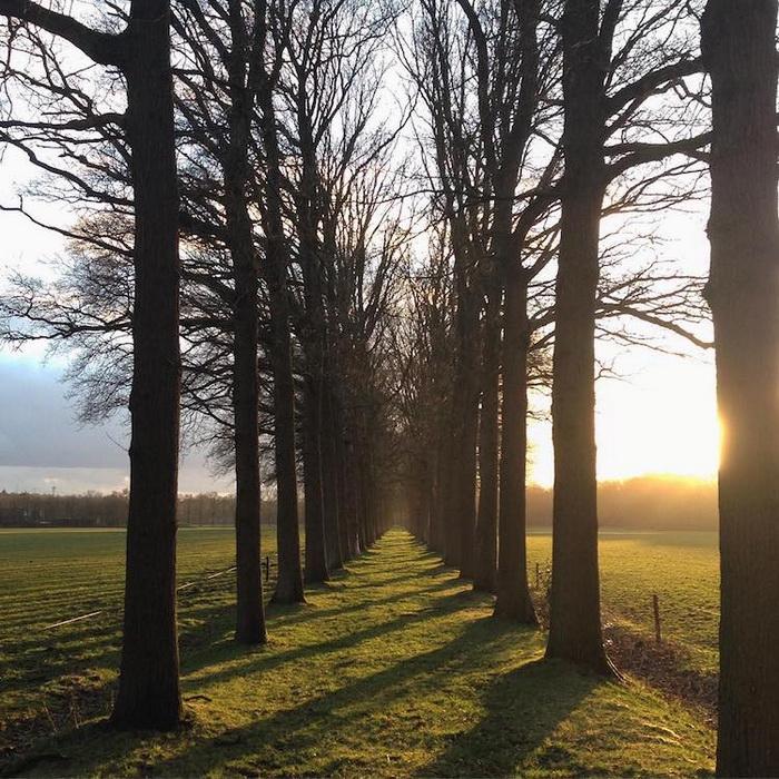 Тоннель из деревьев в Тилбурге, Нидерланды