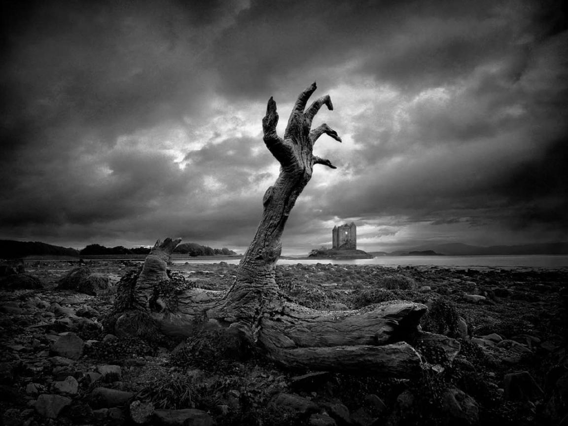 Долгожители, погибшие от рук человека долгожители,животные,природа,растения
