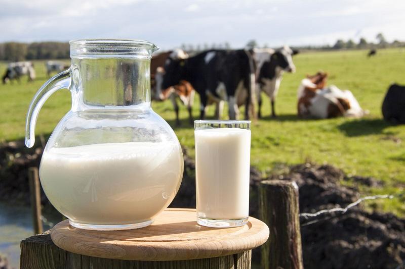 Кому стоит пить молоко в меру