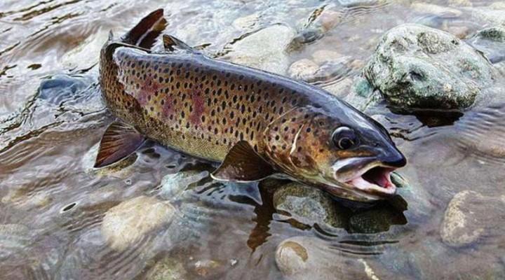 Особенности рыбалки на ленка