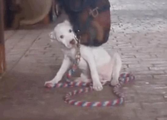 Лошадь стала лучшим другом для крошечного щенка питбуля