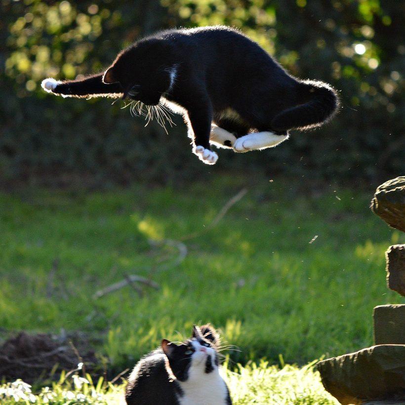 сложностей смешные фото про домашних животных наделяет