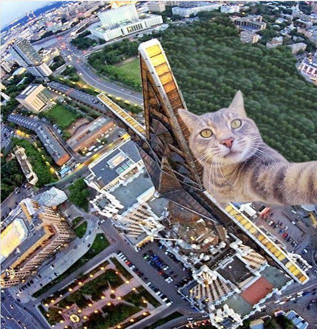 Ему позавидует любой человек: селфи-кот покоряет Instagram своими снимками!)