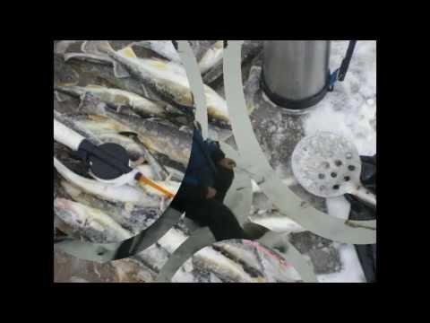 Зимняя рыбалка на Белом море г Беломорск Лов Корюшки