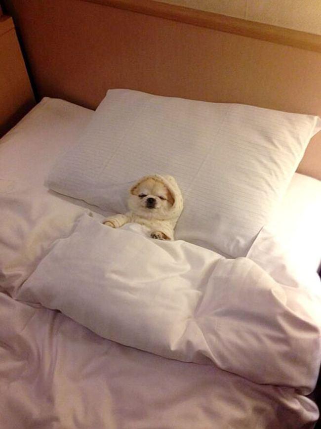 Открытки спокойной ночи прикольные подвинься я лягу
