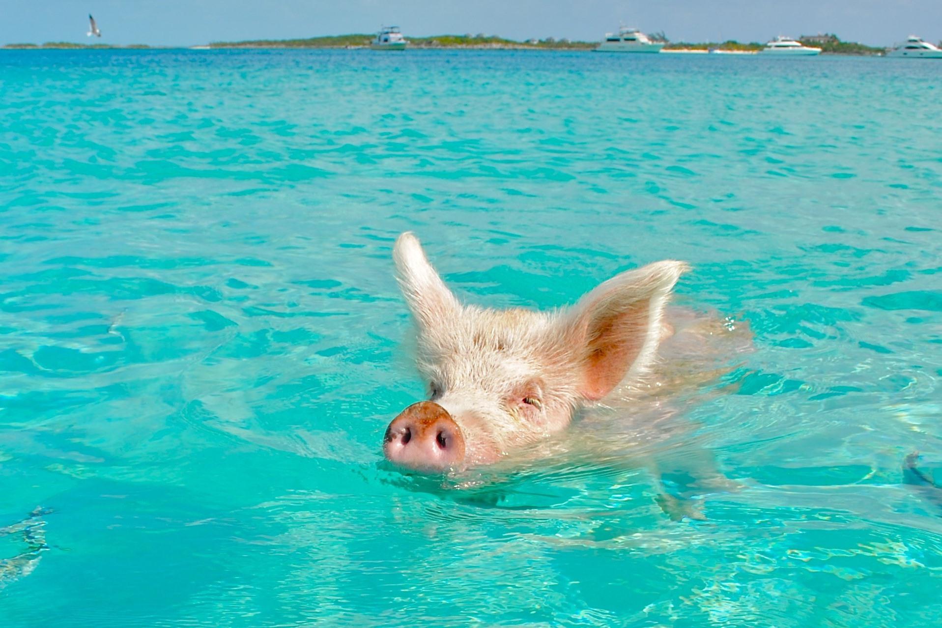 Животные на море прикольные картинки, прощенное воскресенье как
