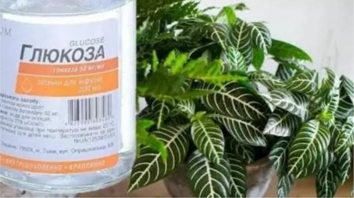 5 лайфхаков по уходу за комнатными растениями, которые вряд ли пришли бы в голову комнатные растения,полезные советы,цветоводство