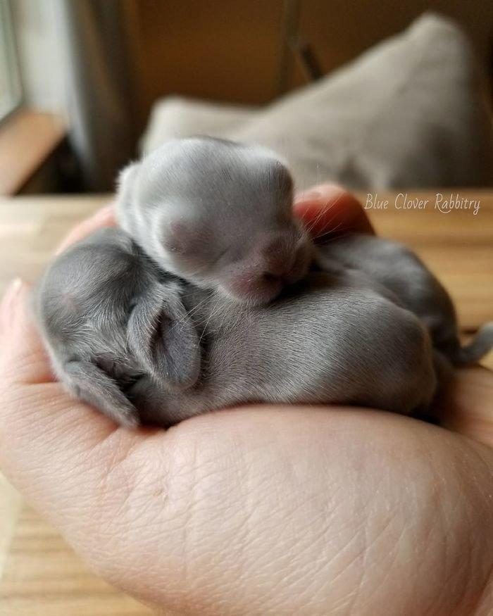 24. Кролики это не только ценный мех, детеныш, детеныши, детеныши животных, кролик, кролики, пушистый позитив, ушастый