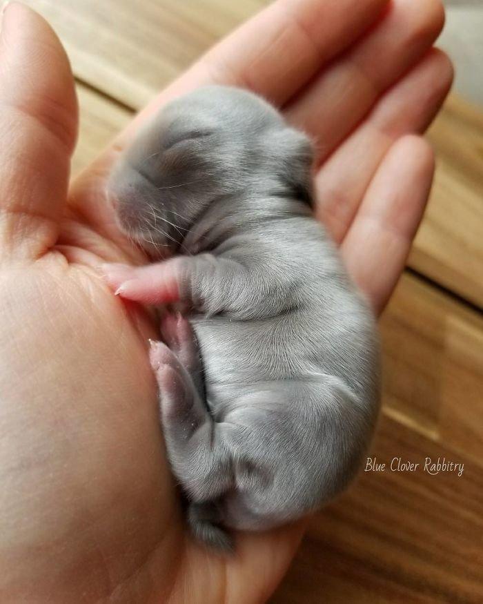 13. Кролики это не только ценный мех, детеныш, детеныши, детеныши животных, кролик, кролики, пушистый позитив, ушастый