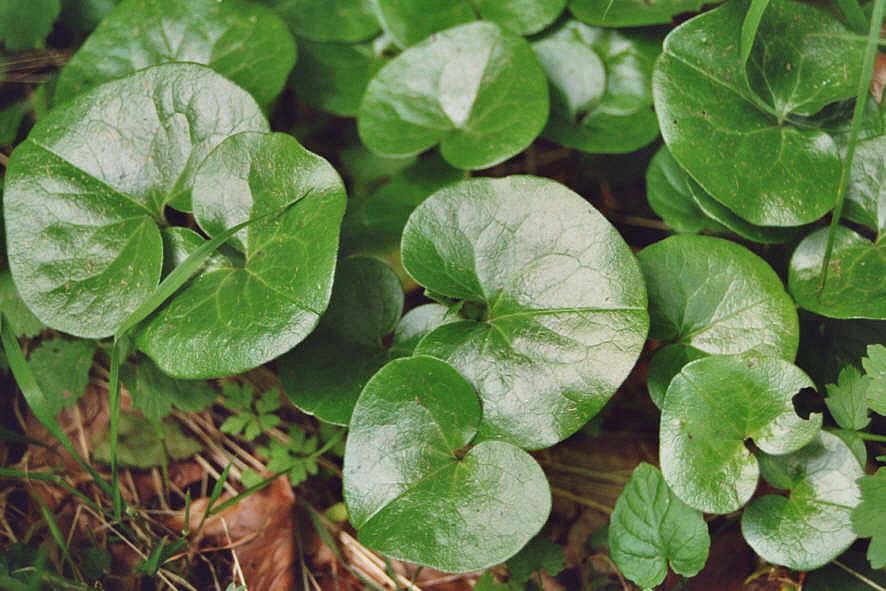 Сорняки подскажут, насколько участок пригоден для овощей