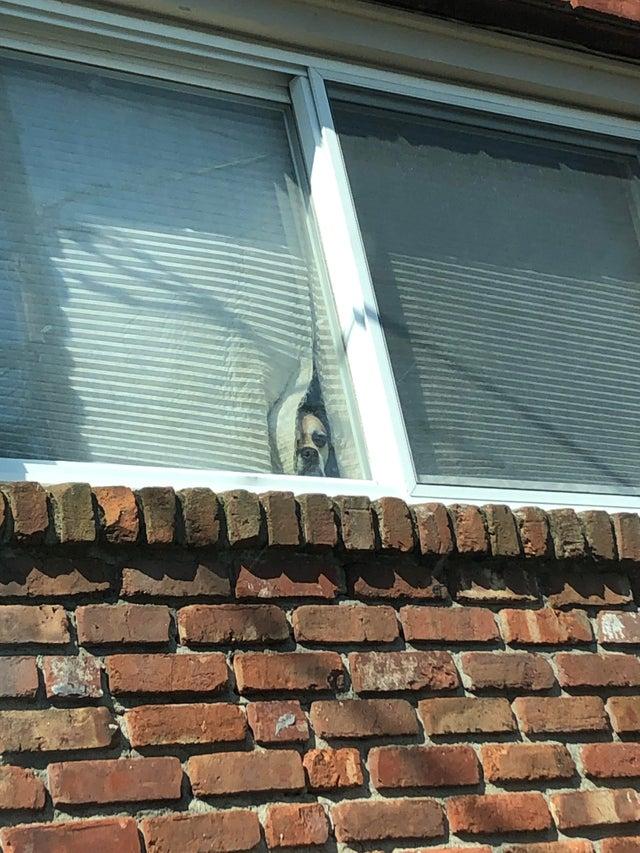 """5. """"Каждый раз, когда я ухожу на работу, он смотрит на меня"""" животные, кошки, милота, мимими, смешные животные, собаки, фото"""