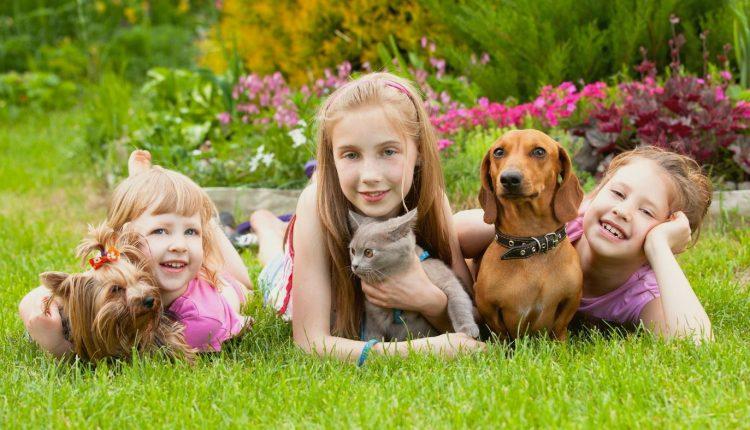 Домашние животные в жизни ребенка