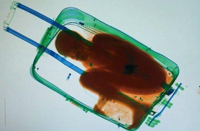 13. Живой человек авиаперевозки, багаж, досмотр, забавно, находки, служба безопасности, служба безопасности аэропорта