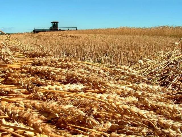 ГМО-скандал в Поволжье: агрохолдингом заинтересовалась ФСБ? россия