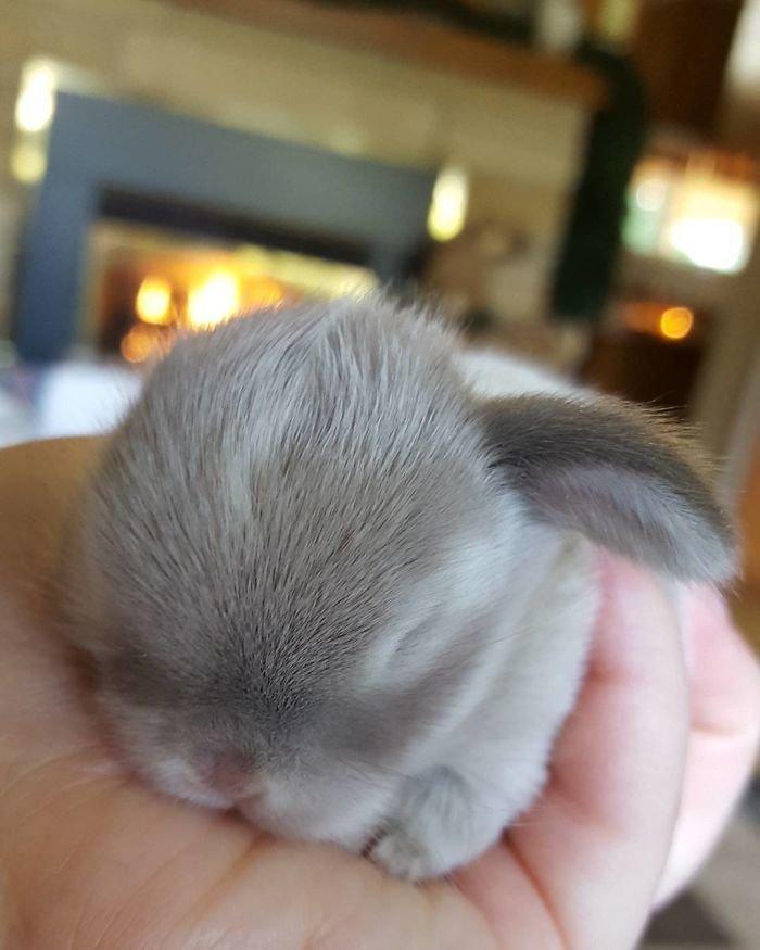 21. Кролики это не только ценный мех, детеныш, детеныши, детеныши животных, кролик, кролики, пушистый позитив, ушастый