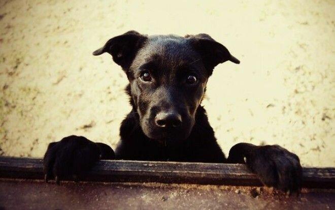 Фотографии беспородных собак на улице картинки