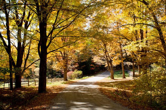 Покажите нам золотую осень, которую вы видите из окна