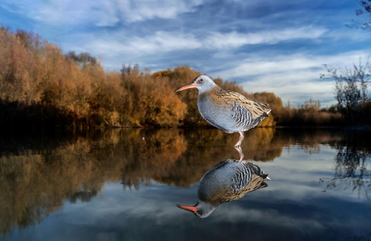 Лучшее с конкурса Bird Photographer of the Year 2018