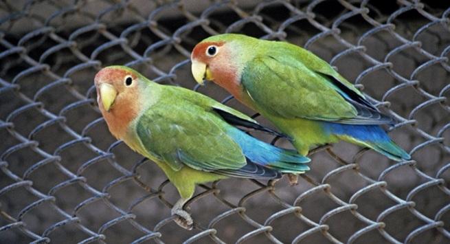 Попугай насмотрелся правосла…