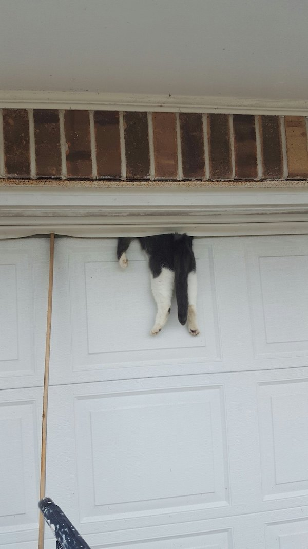 The cat that was trapped in a garage door