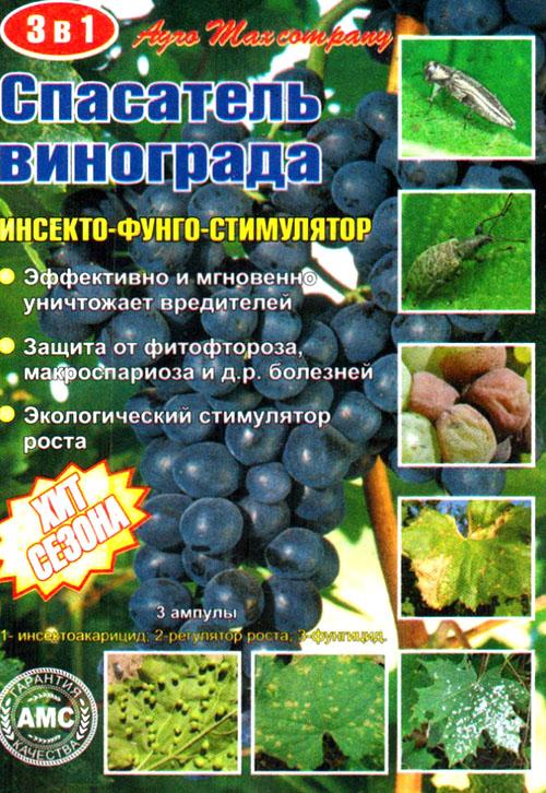 Чем опрыскивать виноград от болезней советы