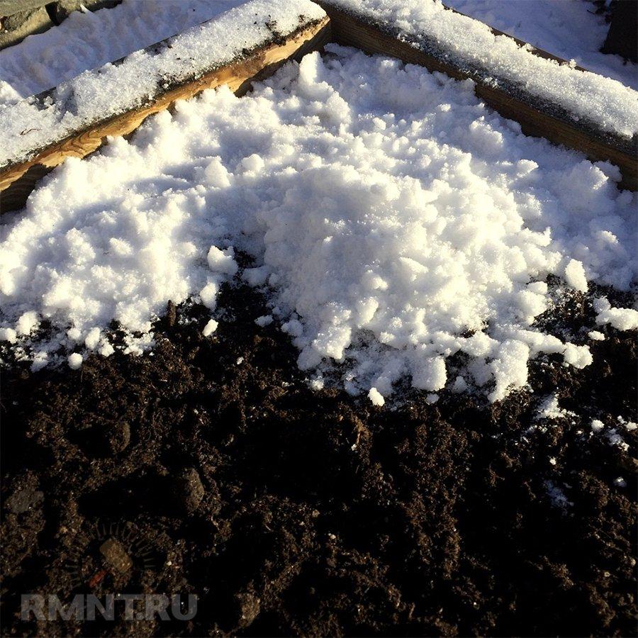 Какие растения можно посадить зимой дача,сад,садоводство