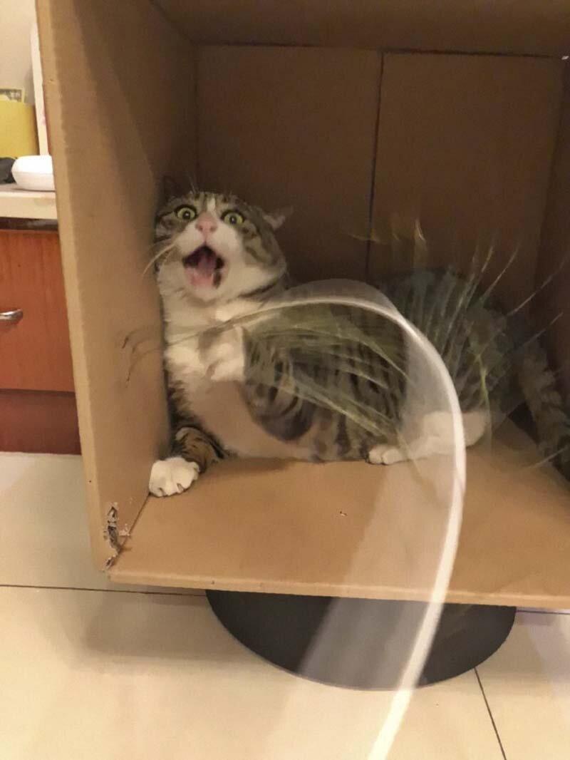 Найден эмоциональный кот, достойный звания «король драмы»! животные