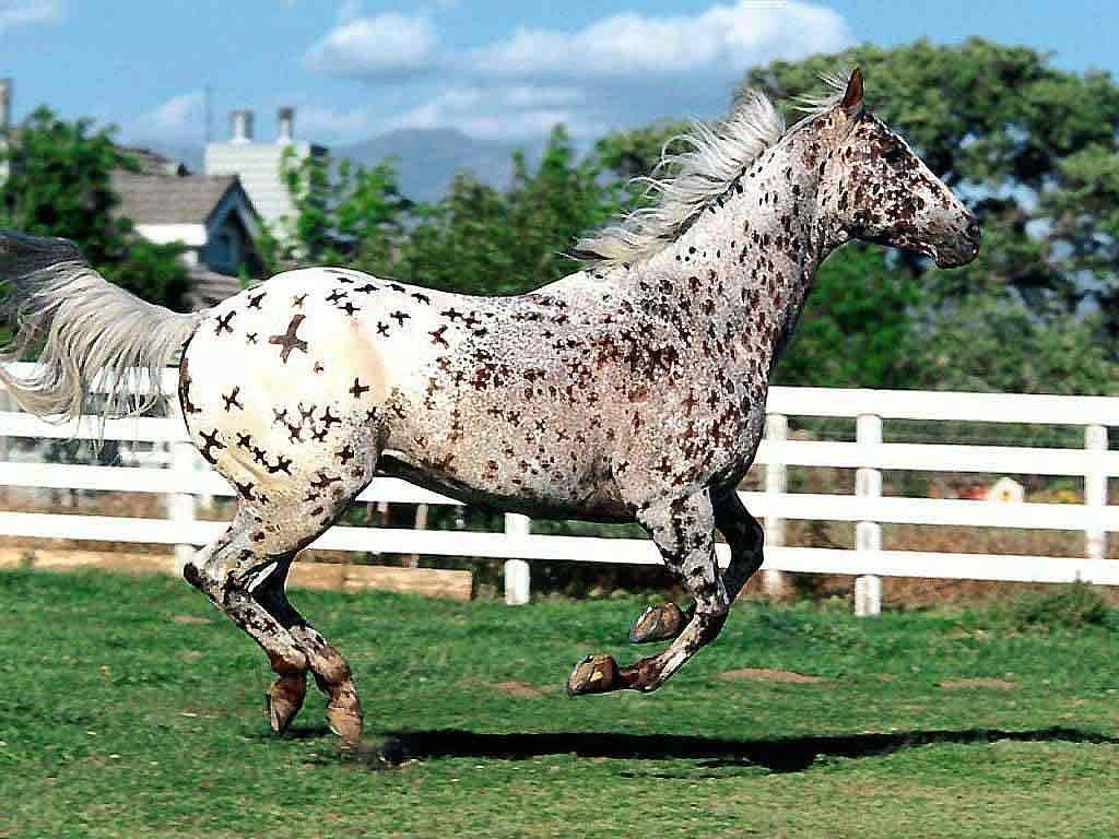 То, что вы не знали о лошадях