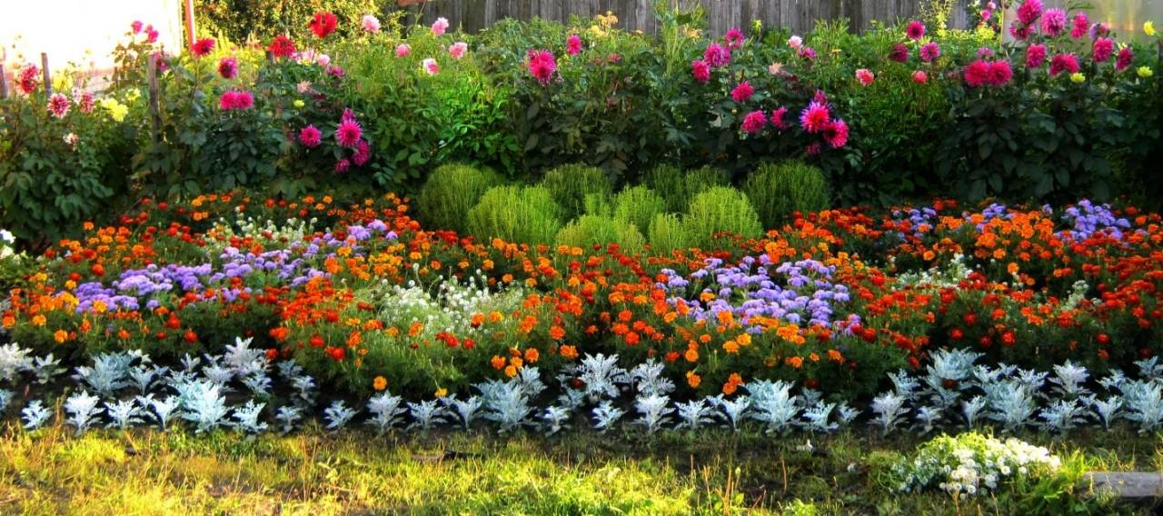 Какие цветы надо сажать на рассаду в январе-феврале