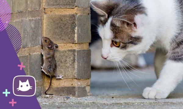 Почему мыши — самая лучшая вкуснятина для кошки