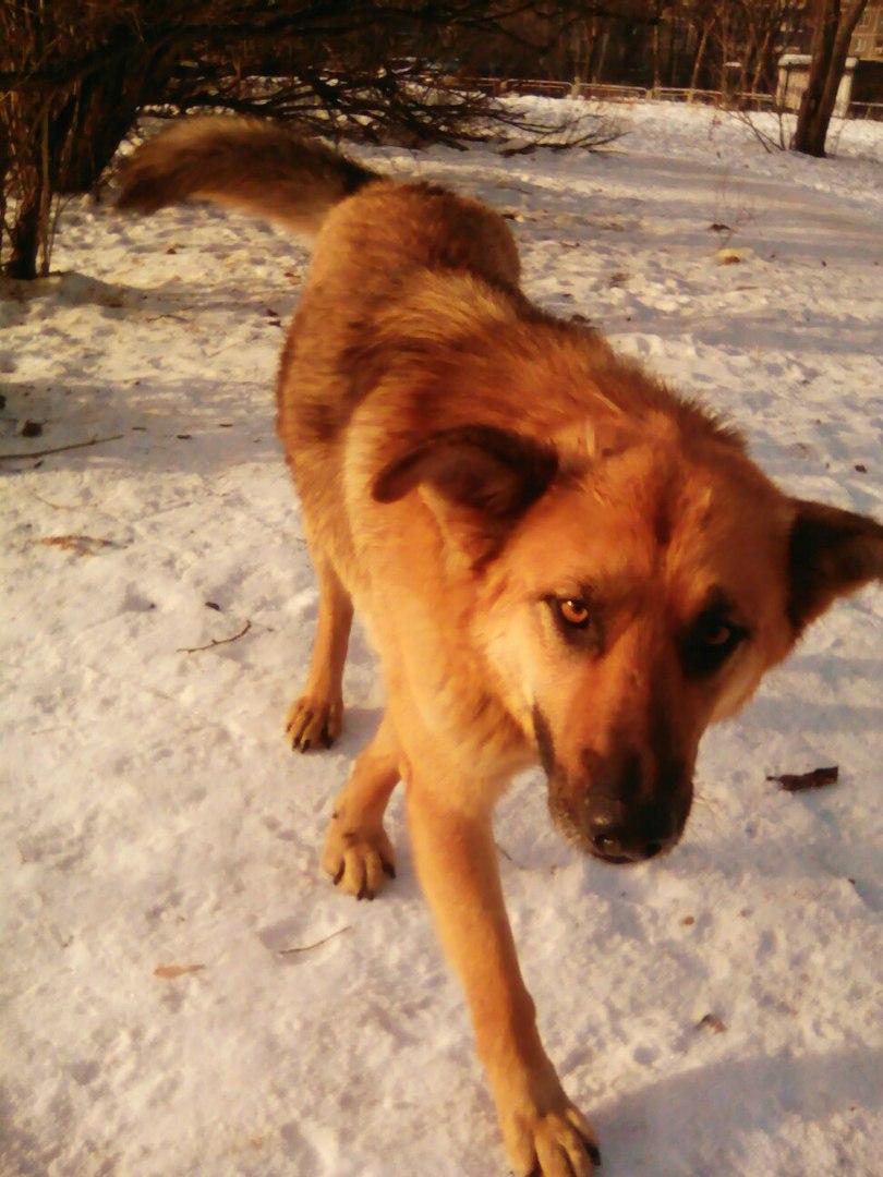 Судьба Бима: когда пса хотели усыновить, он внезапно исчез с улицы… Нашли его просто чудом!