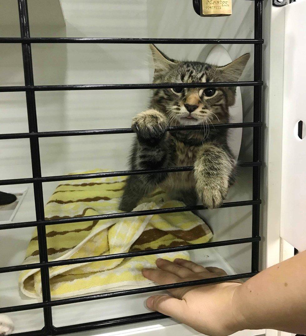 Пара пришла в приют за котёнком. Но увидев в клетке неожиданную картину, они приняли лучшее решение