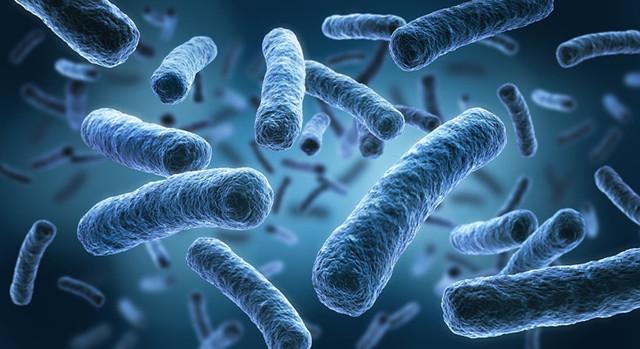 бактерия, вирус, сша, биология, ufospace.net