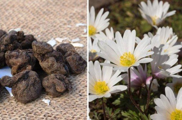 5 цветов, которые нужно проращивать заранее цветы