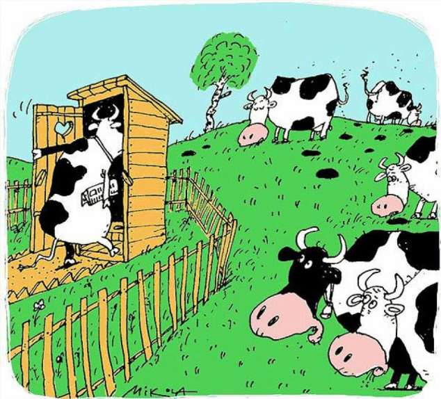 картинки с приколами про корову мало еще загадок