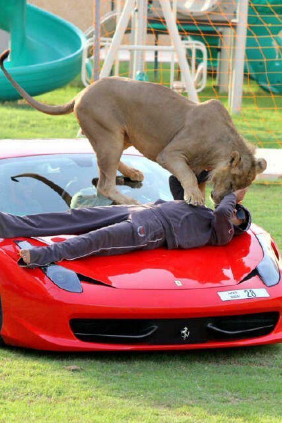 Хищные кошечки и дорогие машины: досуг арабского миллионера