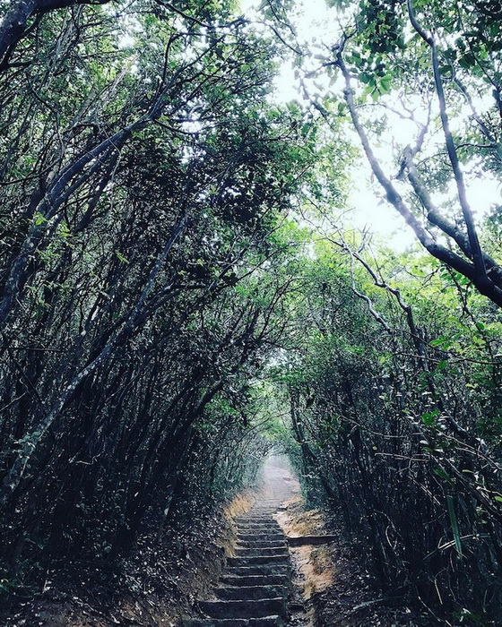 Тоннель из деревьев в Гонконге